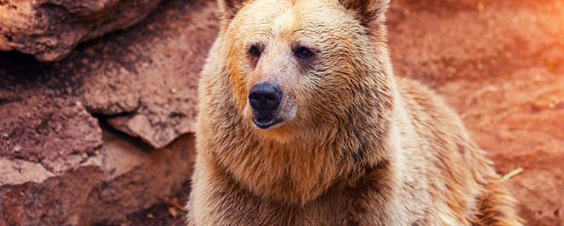 Keep your home and garbage safe from bears with containers by Tuff Boxx
